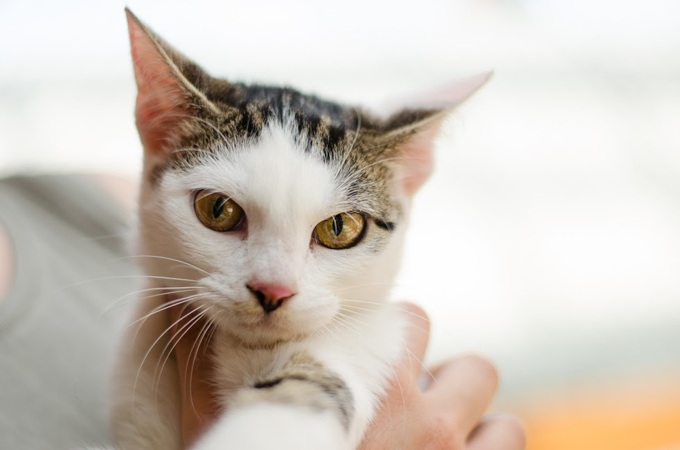 Oryginał Koty – Fauna Ruda Śląska – Towarzystwo opieki nad zwierzętami PE38