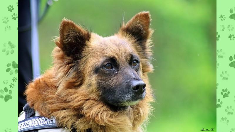 Ogromny Psy – Fauna Ruda Śląska – Towarzystwo opieki nad zwierzętami SI09